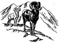 Like the Bighorn ram in our logo, we respect and maintain our Alberta environment. We hold WCB certification in Alberta, British Columbia and Saskatchewan.